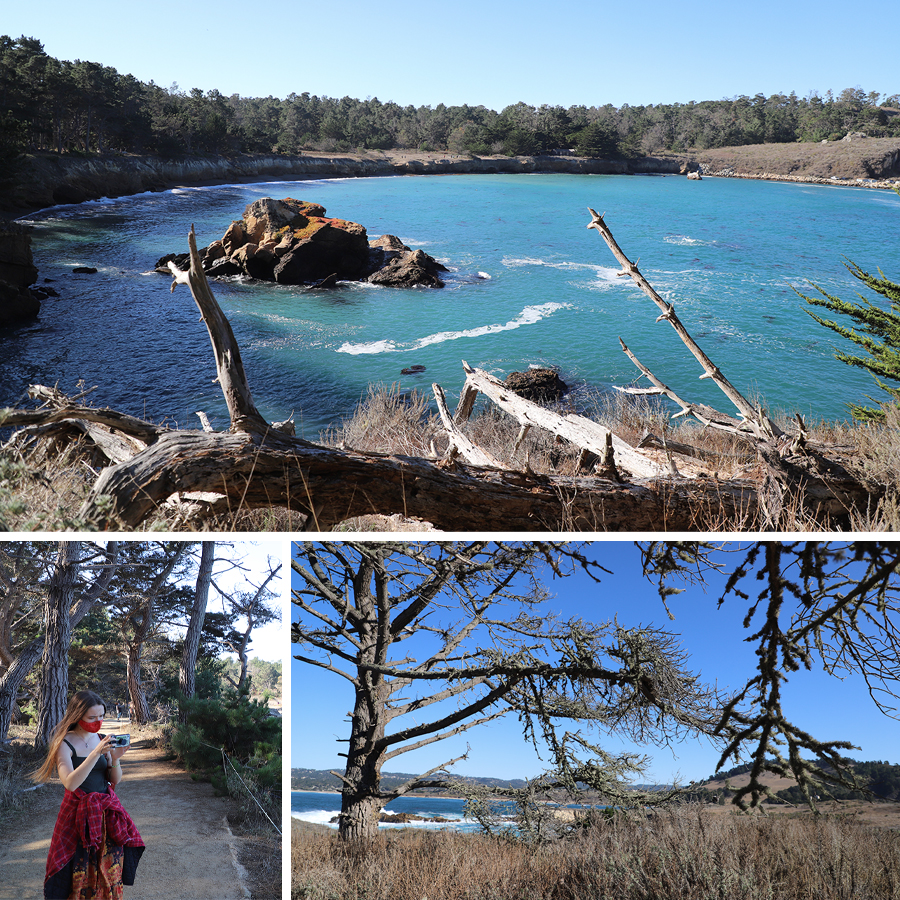the-beauty-of-point-lobos