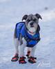 Gus in his winter gear