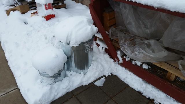 Snow Mushrooms