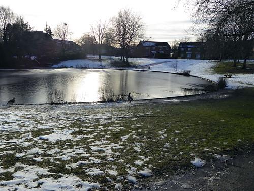 Leegomery Pool