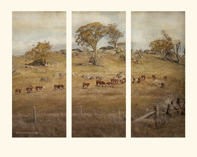 Home Time Triptych
