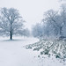Snow day - St Neots' Priory Park
