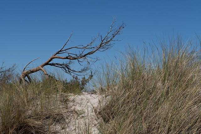 Dünen und Windflüchter