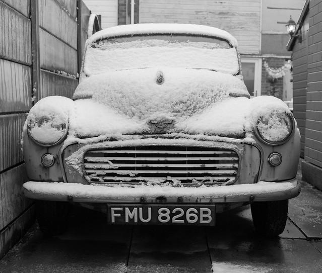 Gracie in Snow - 23/01/21