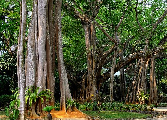 Ruili Subtropical Jungle, Yunnan