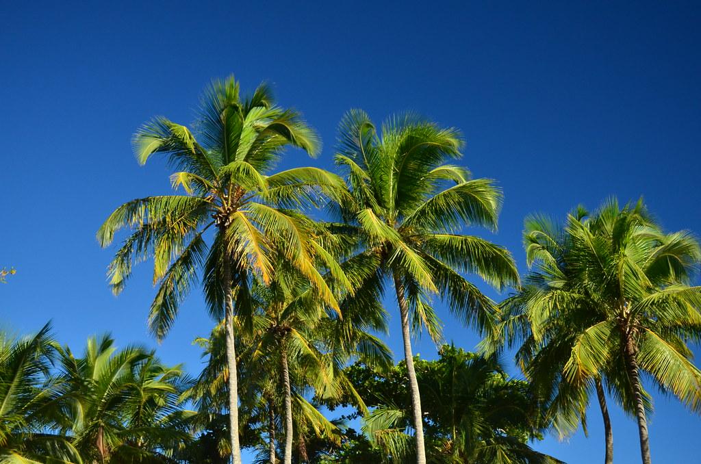 Coqueiros da Bahia