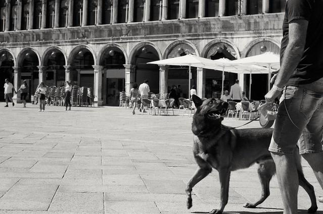 City dogs (film)