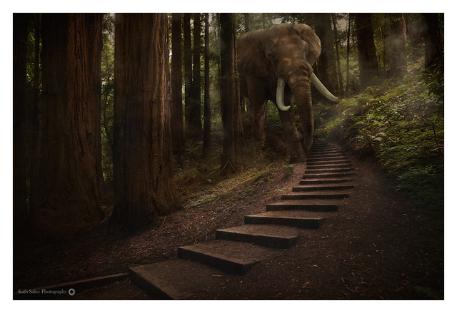 The (little known) Elephants of Muir Woods