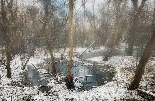 reading berkshire uk nature forest woods sticks growth trees bush bare leafless winter snow ice slush melting water outdoors landscape fog mist lost confused trapped wet wade wellies dogwalk phone mobile twyford charvil england britain thamesvalley iphone se photoshop