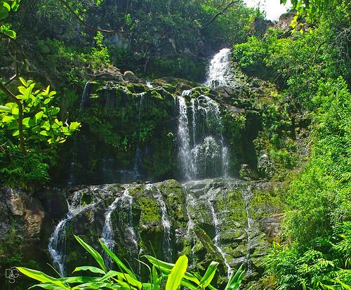 hawaii bigisland waterfall waterfalltour tropical rainforest landscape stream kohala