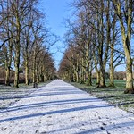 Snowy tree lined path at Haslam Park, Preston