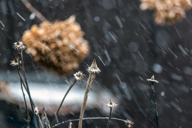 windy snow
