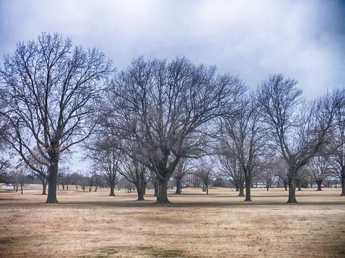 lafortune trees hdr nik 02