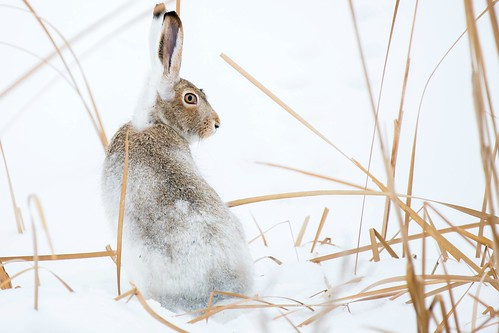 Jackrabbit | by davezimmerman906