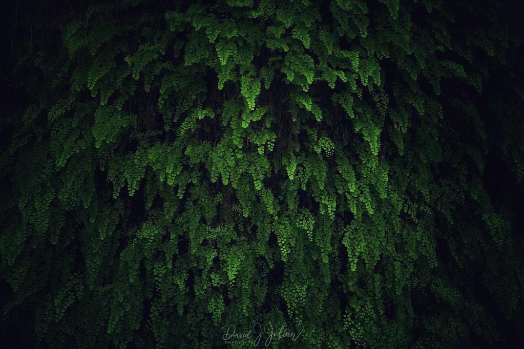 Green (Explored)