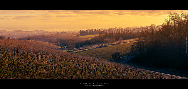 Beaujolais Landscape (France)