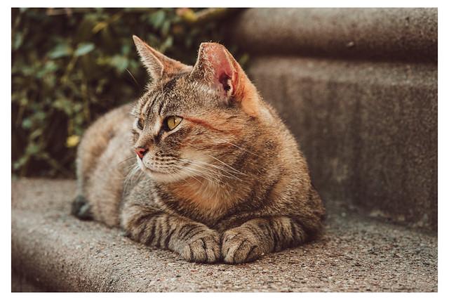 Portrait of a Step Cat - Mt Airy, Philadelphia - PA Web 1_Scaled