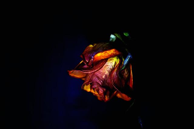 La vraie âme de la rose