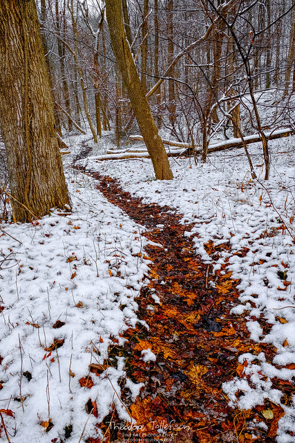 Winter Path, Fall Leaves