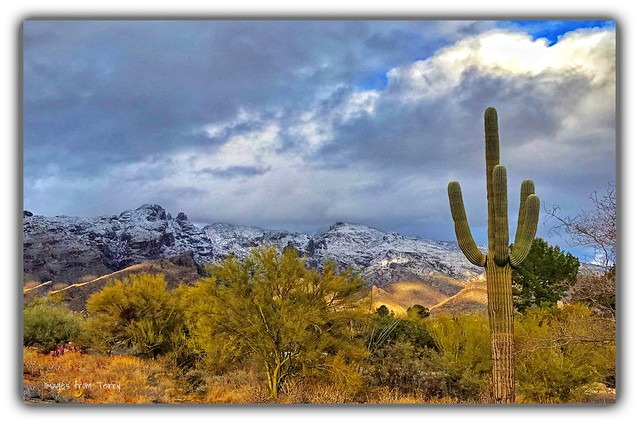 A Dusting in the Catalina's