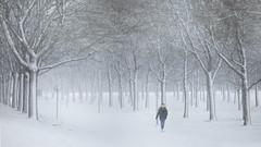 Snow storm, Uppsala, January 25, 2021