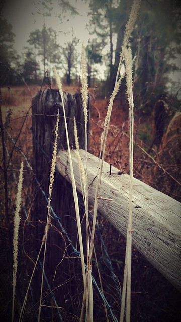 By the fence post.
