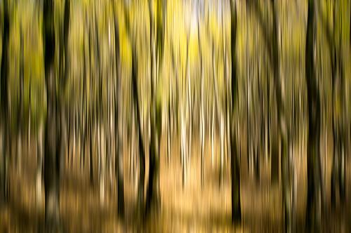 verticalmotionblur motionblue trees sunlight landscape abstract