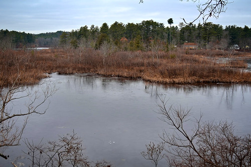 fosterspond massachusetts cloudy water reflection tree grass winter landscape frozen cold goldsmithreservation bessiespoint