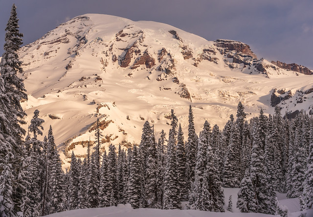 Mount Rainier Morning Snowscape