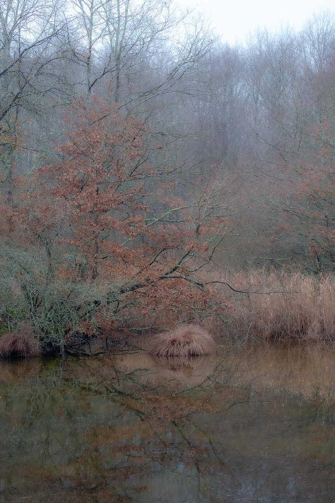 mysty walk in forest