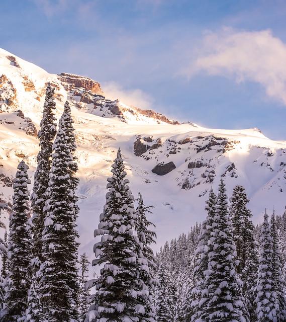 Mount Rainier and Winter Trees