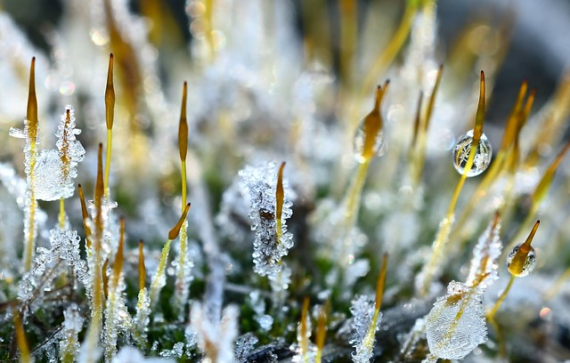 Fantastic wonderworld - Ice crystals in the grass