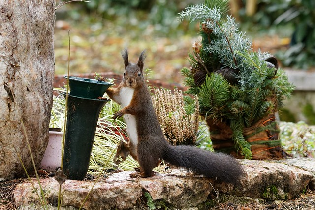 Squirrel 2021-III