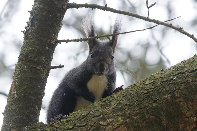 Squirrels 2021-III