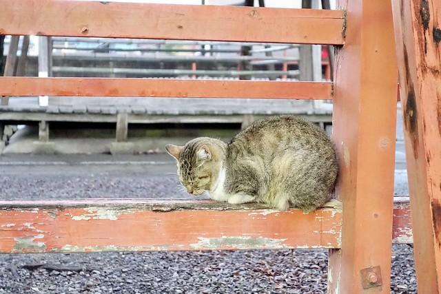 Today's Cat@2021−01−27