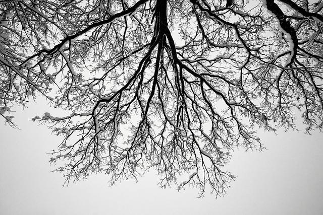 Snowy Veins of Life - Bavaria (explored)