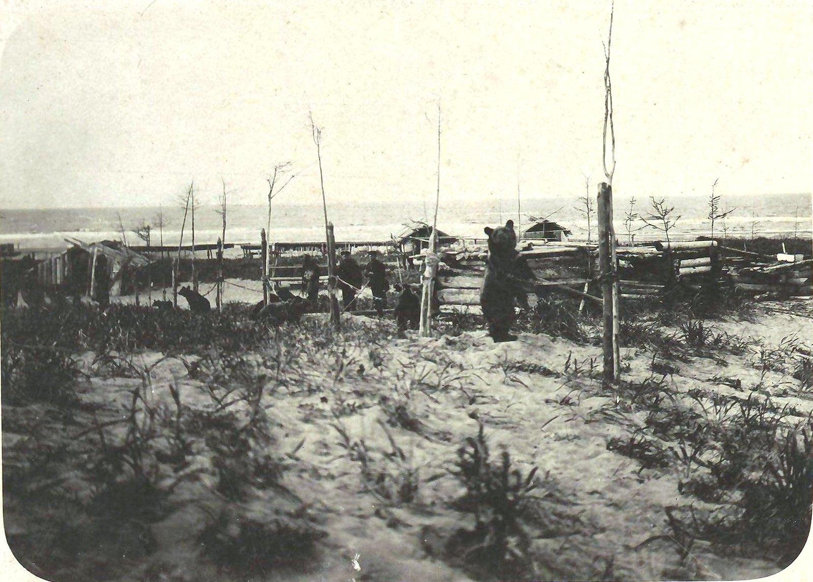 13. Медведи для медвежьего праздника в северной части Сахалина в гиляцкой деревне Кеф