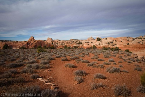 Looking back up the Lathrop Trail on the red-dirt bench, Canyonlands National Park, Utah