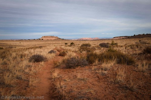 Looking back across the grasslands toward the Lathrop Trailhead, Canyonlands National Park, Utah