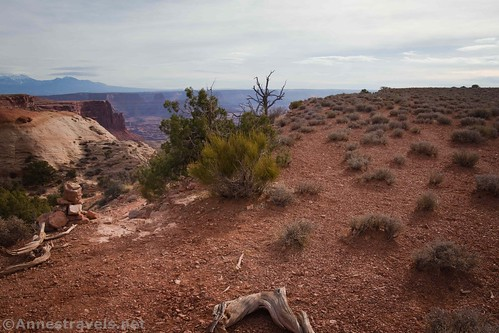 The official Lathrop Trail goes left; the trail to the overlook goes straight (to the right of the green bush), Canyonlands National Park, Utah