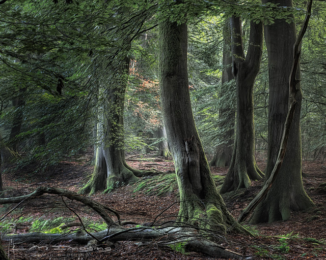 Livin' Woods