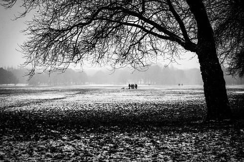 winter snow snowy cold park parklife liverpool merseyside mono bw blackandwhite blackwhite landscape