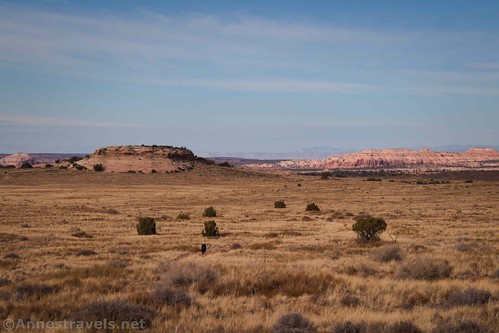 Looking back across the grasslands on the Lathrop Trail, Canyonlands National Park, Utah