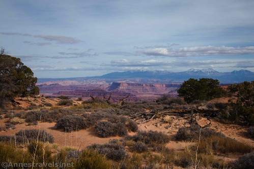 Views from near the slickrock section of the La Sal Mountains, Lathrop Trail, Canyonlands National Park, Utah