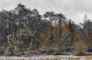 MST52/21 - 03 Winter Woodland