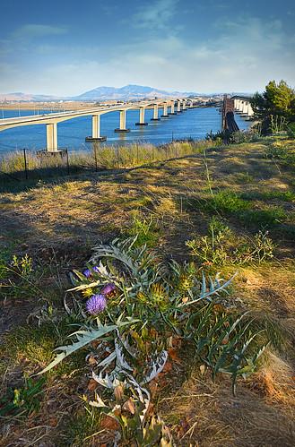 beniciabridge vistapoint benicia bridge california ca sanfranciscobayarea sanfranciscobay bayarea bay water view usa landscape artichoke plant