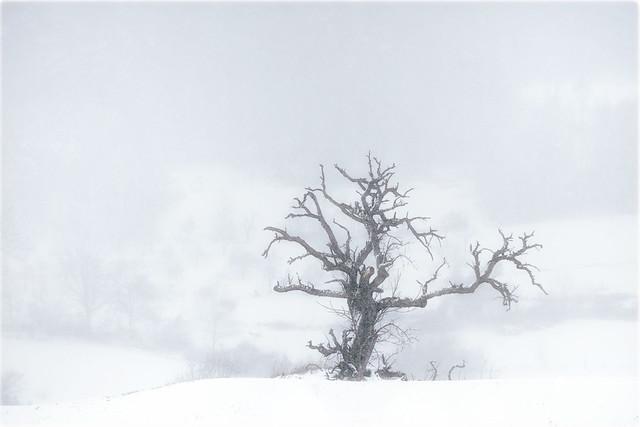 winter`s day