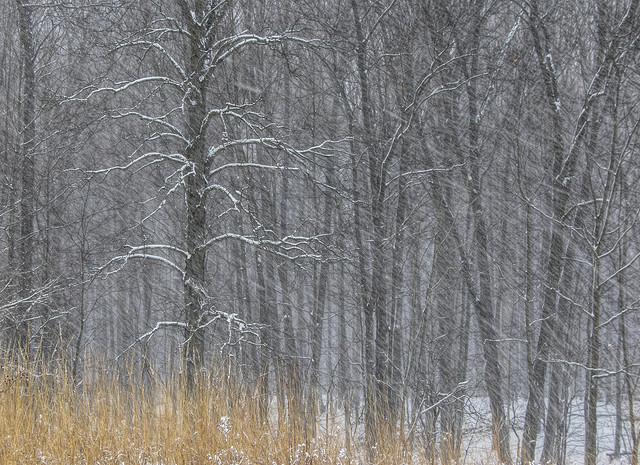 Winter scene......
