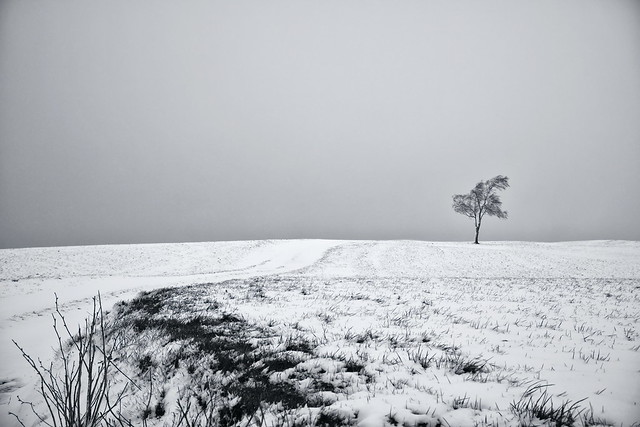 Another Winter - Another Tree