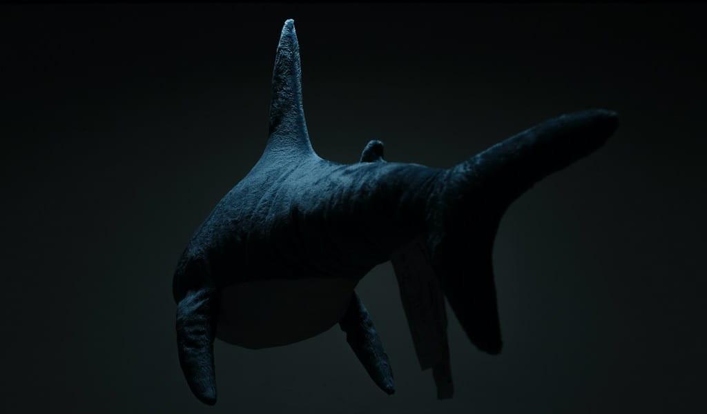 Une nouvelle espèce de baleine à fanons